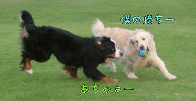 CIMG3505_20150621103514c74.jpg