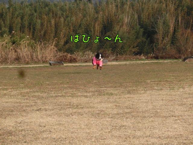 CIMG3636_20150105080916a1a.jpg