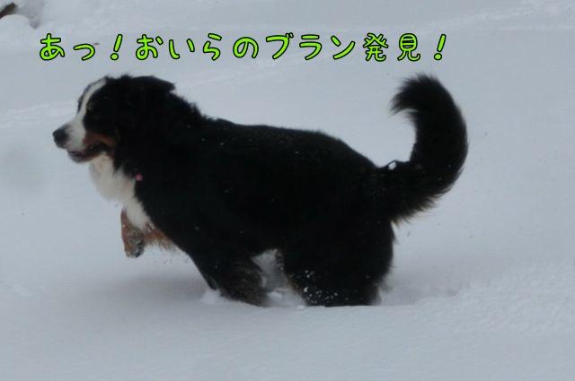 CIMG3896.jpg