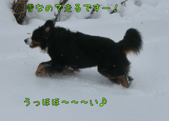 CIMG3897.jpg