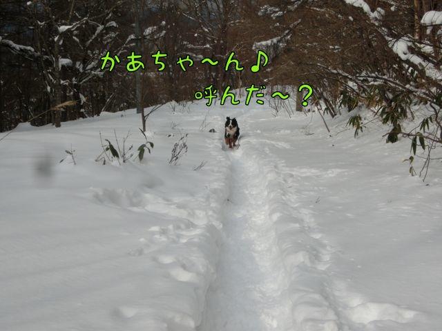 CIMG4092_201501090704011ec.jpg