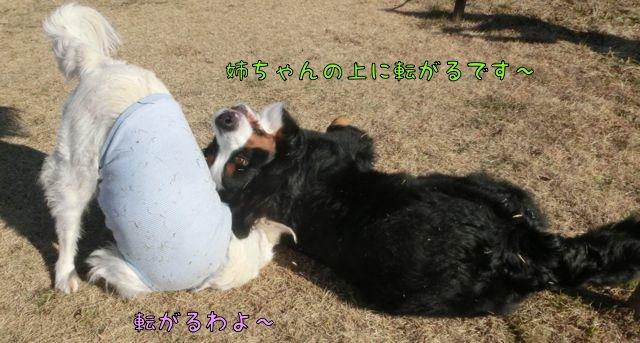 CIMG4194_2015011310362596a.jpg