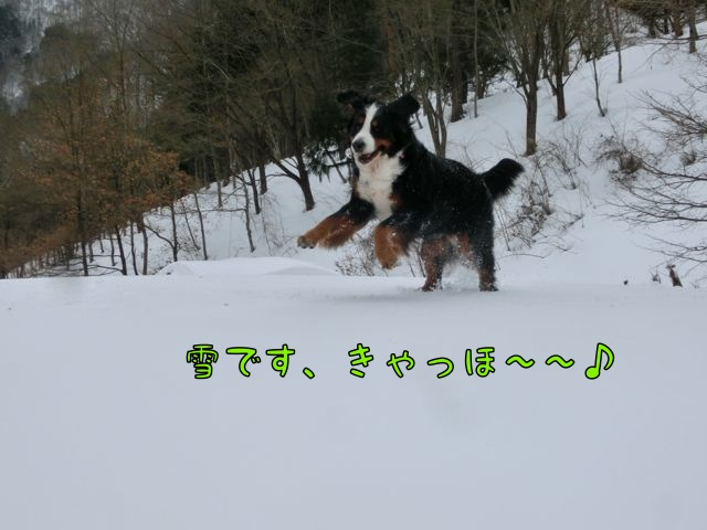 CIMG4246.jpg