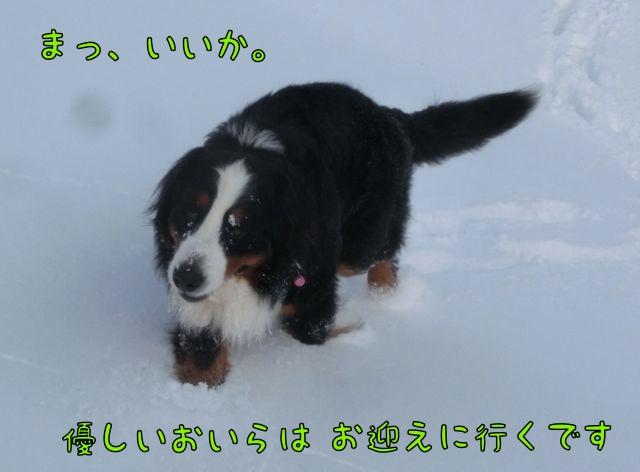CIMG4257.jpg
