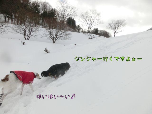 CIMG4398.jpg