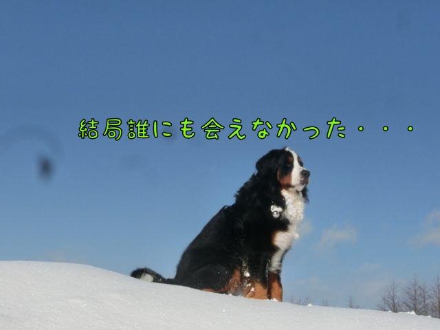CIMG4502_20150115131334623.jpg