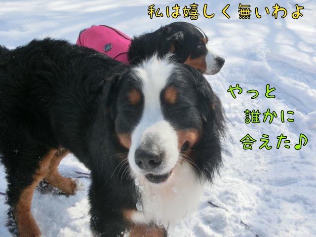 CIMG4508.jpg
