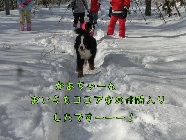 CIMG4522.jpg