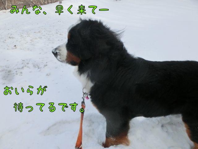 CIMG4651_2015011921524554a.jpg