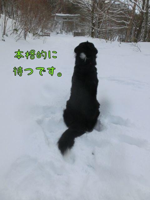 CIMG4680_2015011922073604c.jpg