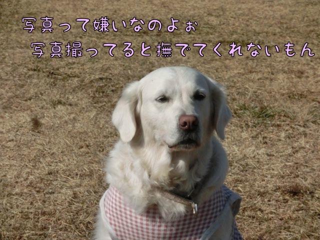 CIMG4890_201501221337263f0.jpg