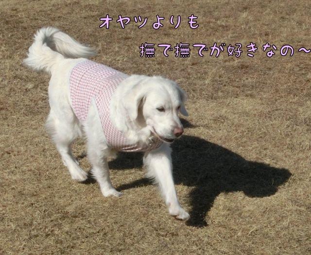 CIMG4892.jpg