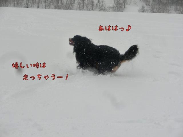 CIMG5774.jpg
