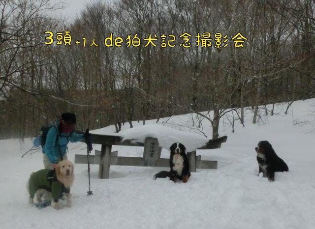 CIMG5829.jpg