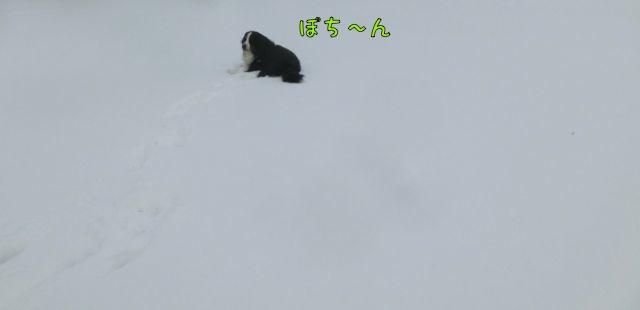 CIMG5873.jpg