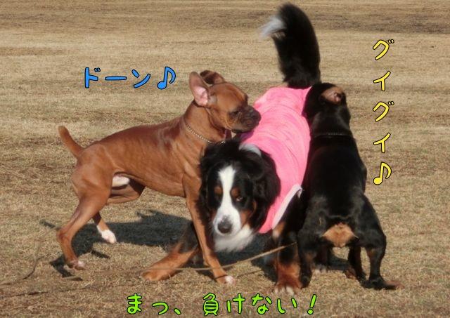 CIMG5986_20150213160147bcd.jpg