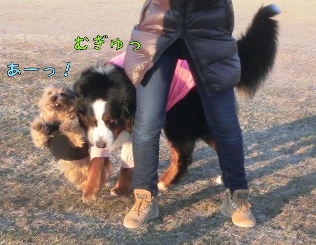 CIMG6288_20150217131713db6.jpg