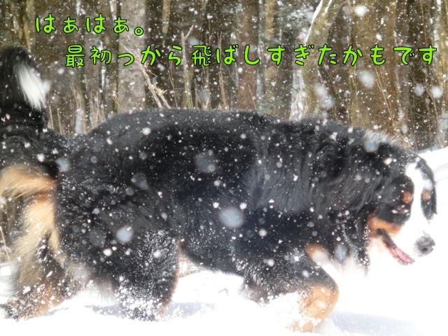 CIMG6369.jpg