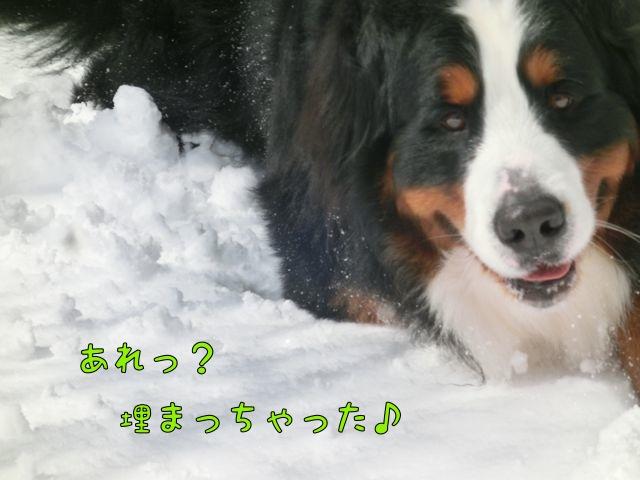 CIMG6403_20150220215205537.jpg