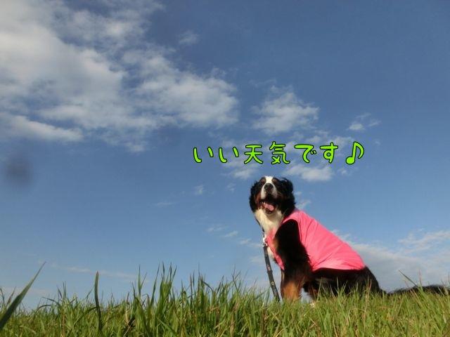 CIMG6793.jpg