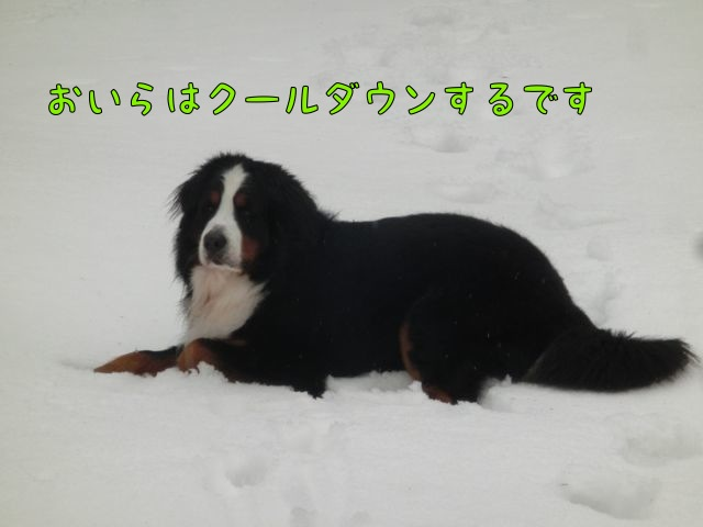 CIMG7381.jpg