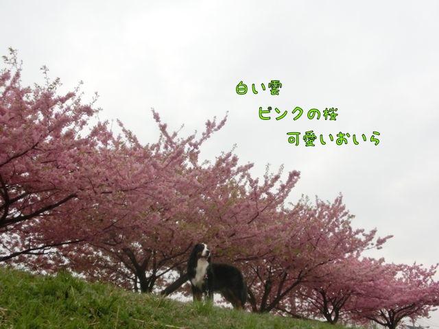 CIMG7883.jpg