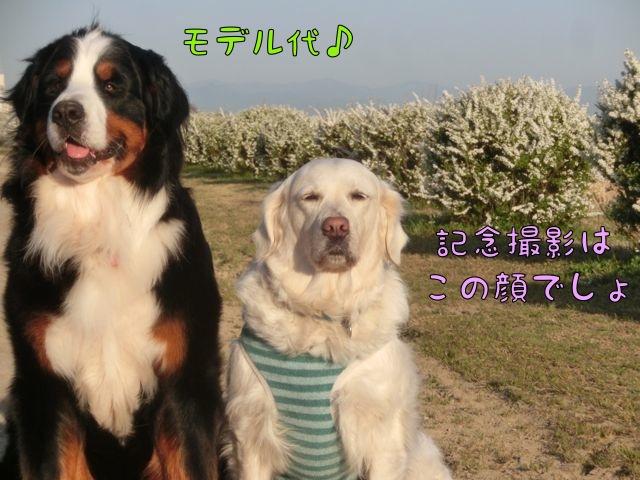 CIMG8471.jpg