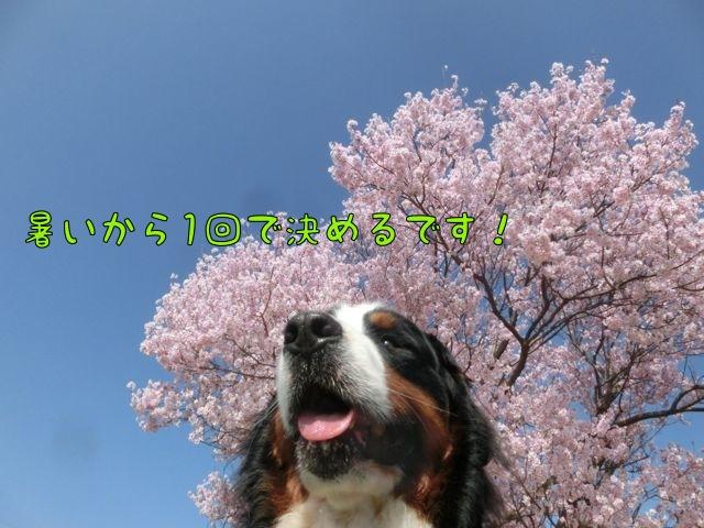 CIMG8878.jpg