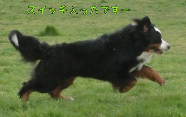 CIMG8928_20150402103047344.jpg