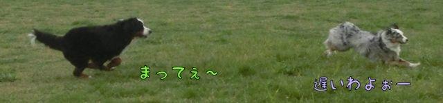 CIMG8934_20150402110223376.jpg
