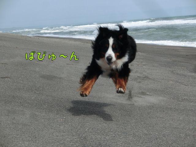 CIMG9215.jpg
