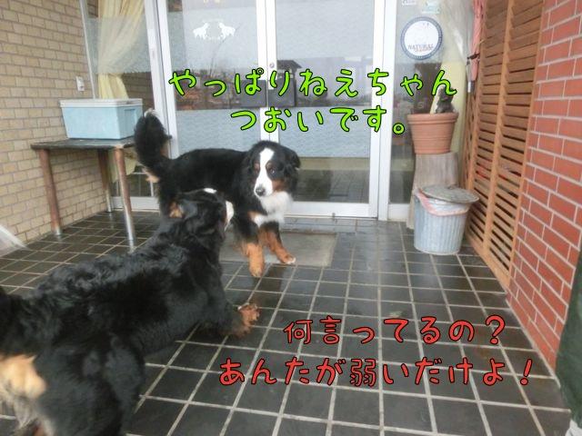 CIMG9322_20150407202652222.jpg