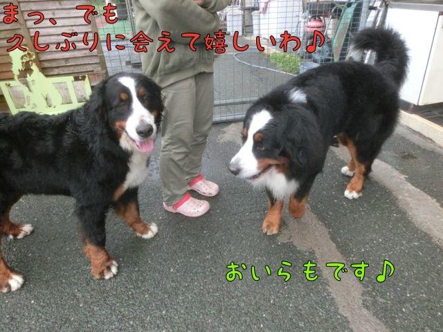 CIMG9338.jpg