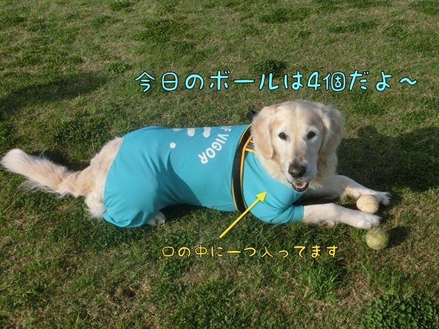 CIMG9431.jpg
