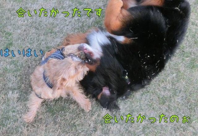 CIMG9471_20150410123236b1a.jpg