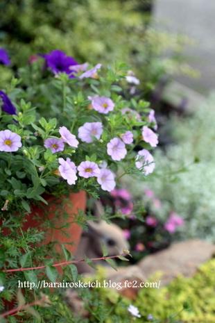 オープン花壇6月1
