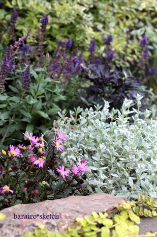 オープン花壇6月2