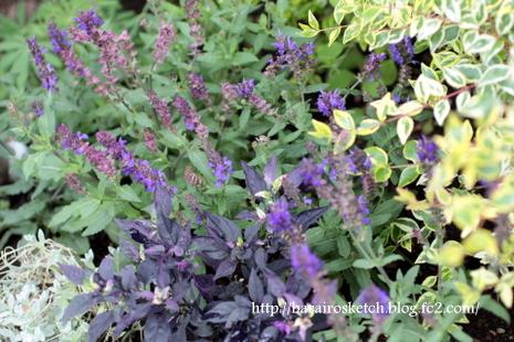オープン花壇6月3