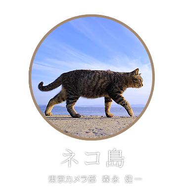 EOS M3 PhotoJourney「ネコ島」