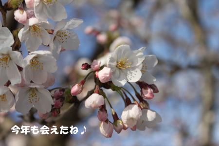 20150328_28.jpg