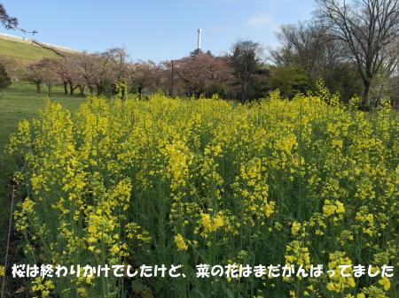 20150414_2.jpg