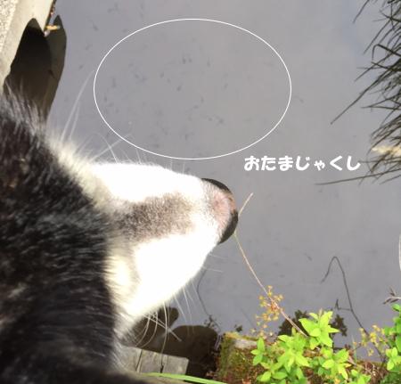 20150424_4.jpg