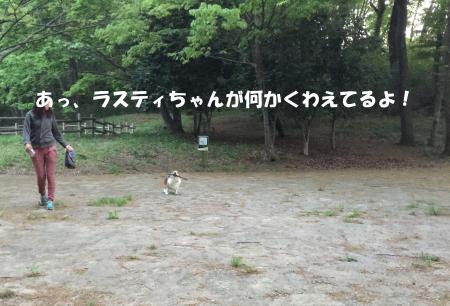 20150427_5.jpg