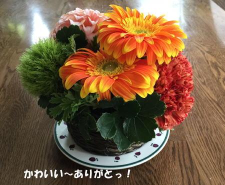20150509_7.jpg