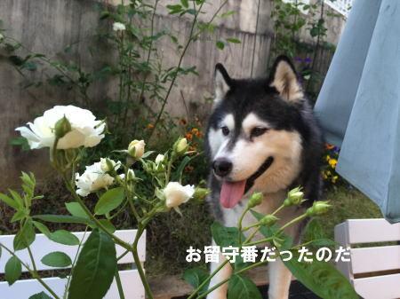 20150514_8.jpg