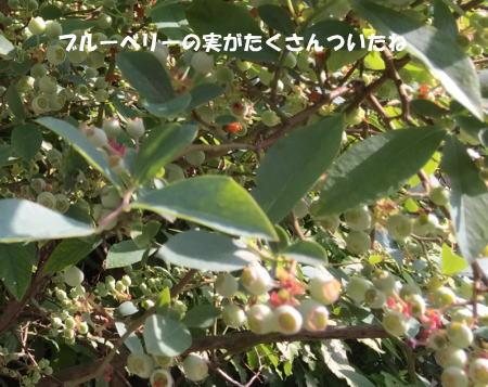 20150518_5.jpg