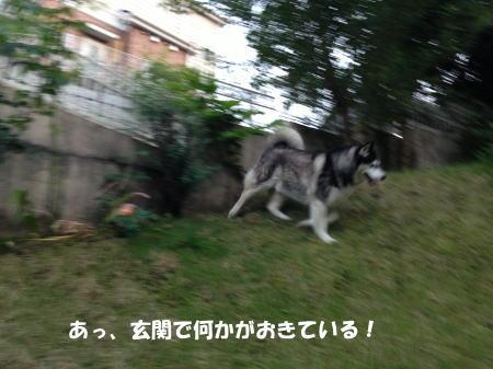 20150519_1.jpg