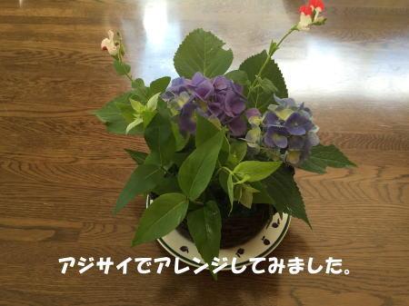 20150625_3.jpg