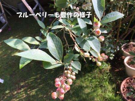 20150625_5.jpg