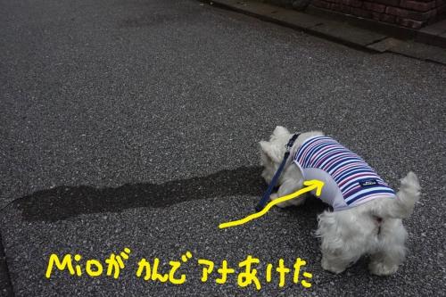 ichiichihoukokusoudansuruyatu1.jpg